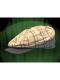 LIGHT IRISH CAP